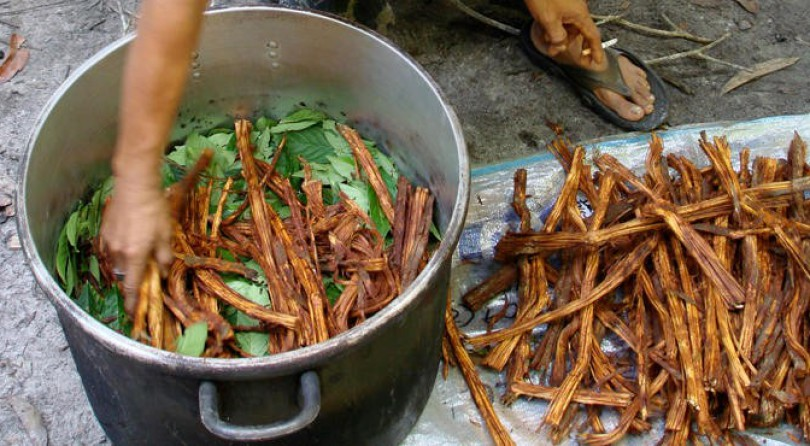 Ayahuasca — Gateway to the Other World