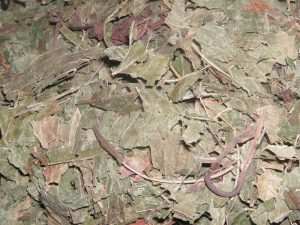 dried kratom